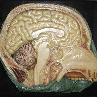 Museo delle Cere Anatomiche Luigi Cattaneo