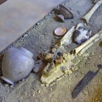 Museo Civico Archeologico e Paleoambientale 'Elsa Silvestri'