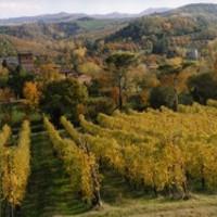 Ecomuseo della Collina e del Vino