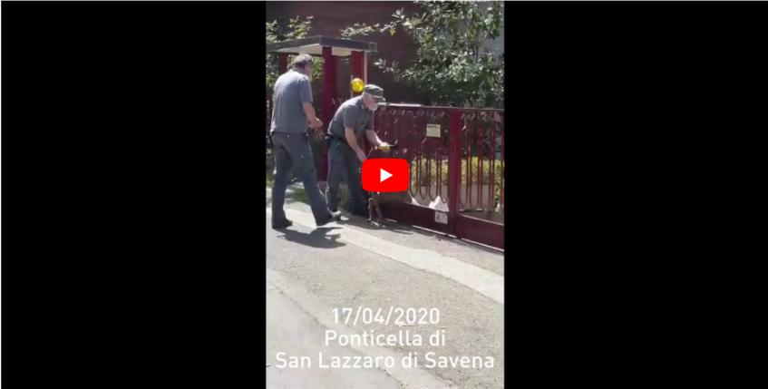 Liberazione di un Capriolo a Ponticella di San Lazzaro di Savena