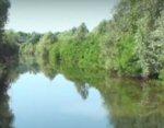 Moria di pesci fiume Reno a Bologna
