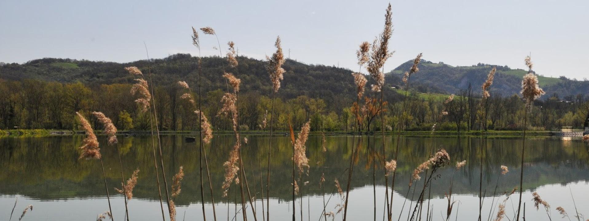 Immagine del Bacino Reno Vivo