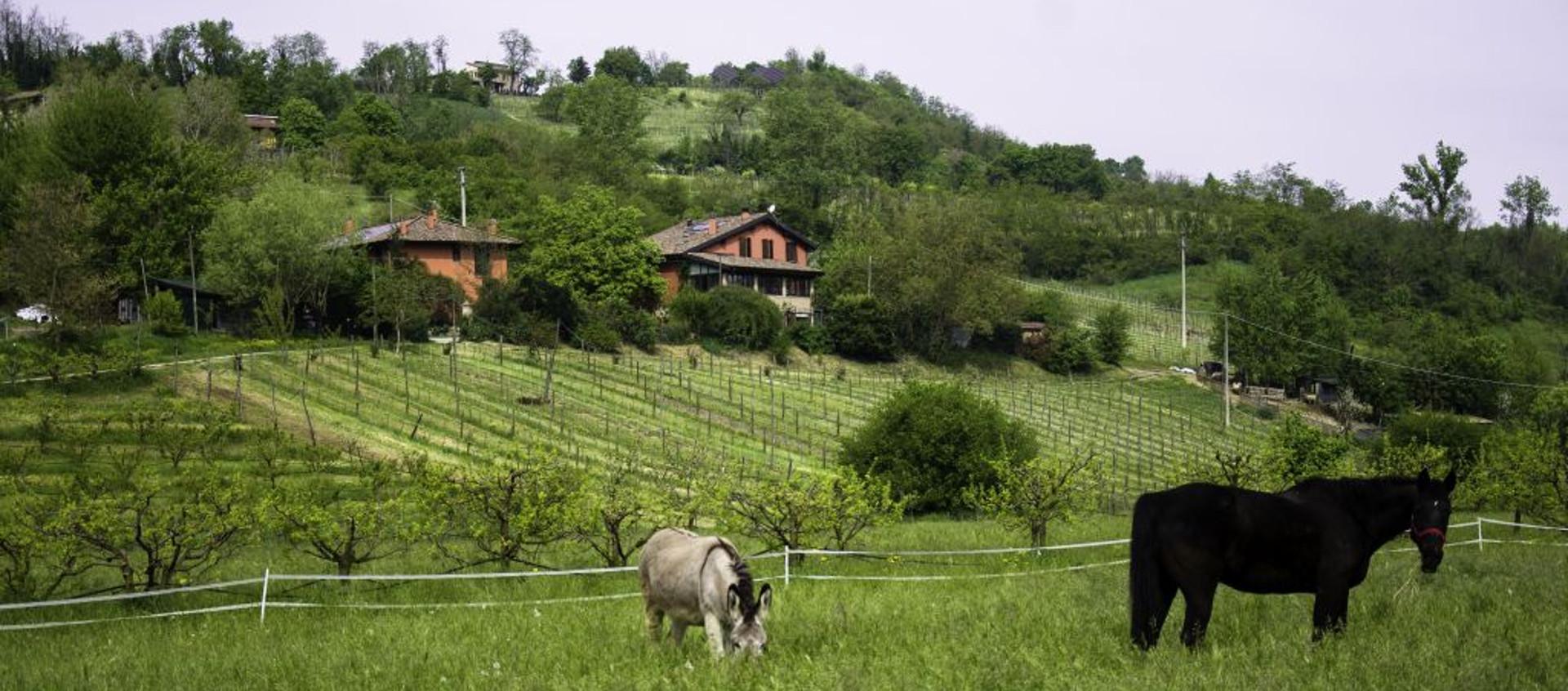 Foto: esterno di fattoria