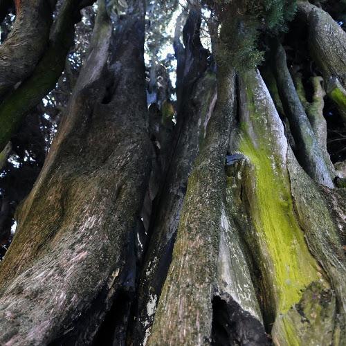 Ottocentro nuovi alberi a Castenaso: la Bassa Benfenati rinasce con 'Un bosco per la città'