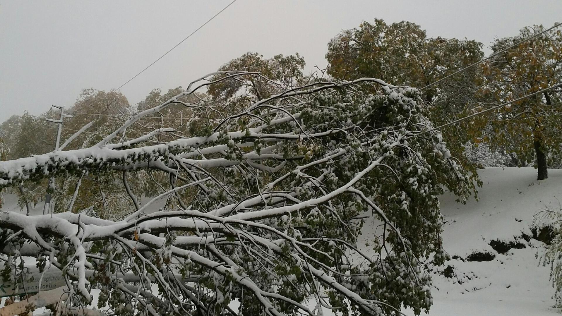 Appennino, al via gli interventi nei boschi per evitare i forti disagi provocati alle linee elettriche durante le nevicate dello scorso anno