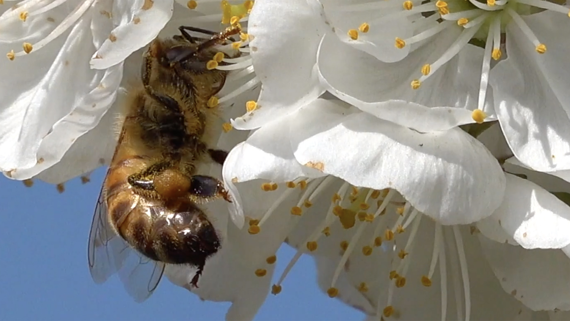"""A Villa Smeraldi APE-ritivo nel Pomario e svuotArmadio! per sostenere la campagna di crowdfunding """"Bee Happy"""""""