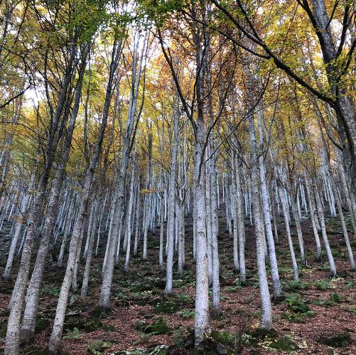 Riforestazione urbana: un corridoio verde sulla Ciclovia del Sole e interventi a Bologna, Imola e Bentivoglio