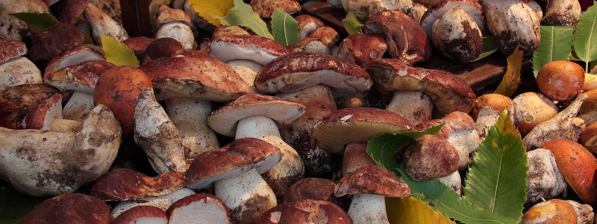 Immagine di funghi