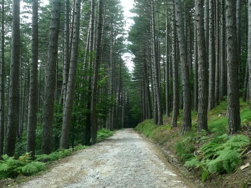 27/09/2010 - Strada forestale per Monte Cavallo a Granaglione - Foto Daniele Magagni