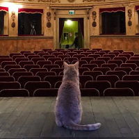 Teatro storico comunale di San Giovanni in Persiceto: fra i suoi tanti ammiratori anche il famoso gatto rosso Gino