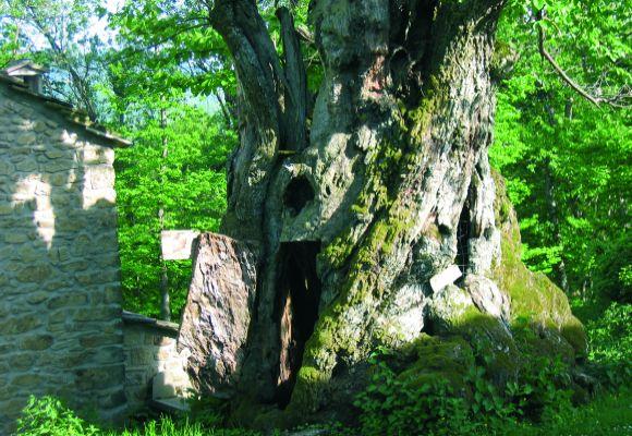 Castel di Casio - Castagno a Monte di Badi - foto di Comune di Camugnano, Alfredo Verardi